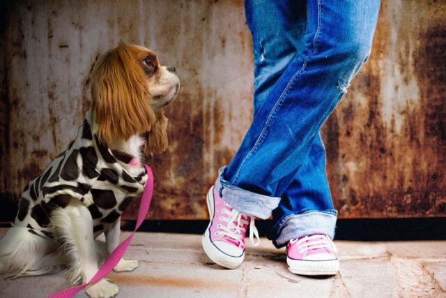 cane davanti a padrone