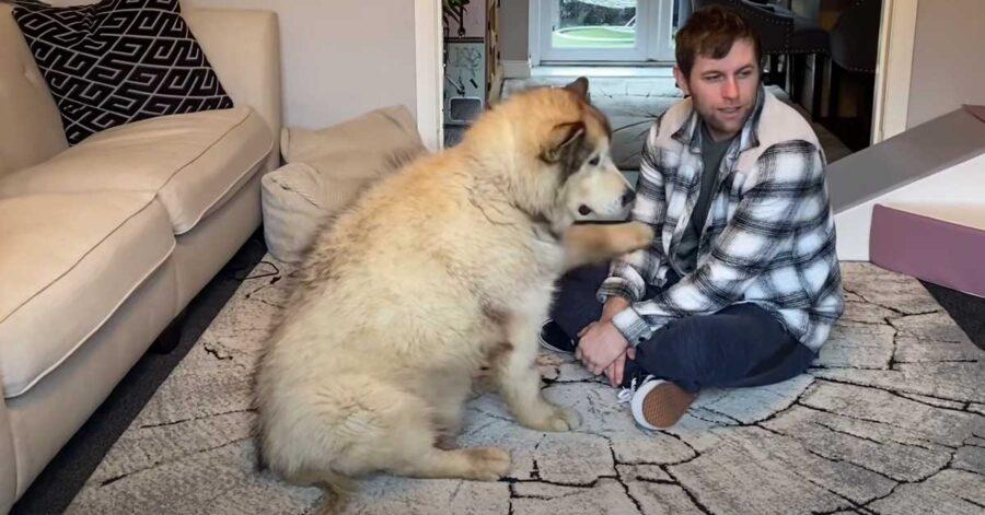Alaskan Malamute con il proprietario