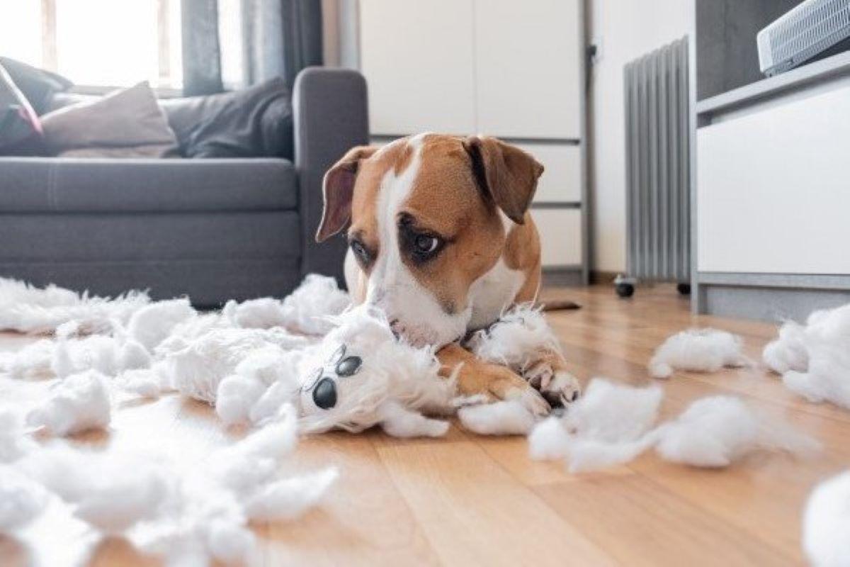 cagnolino ha strappato un pupazzo