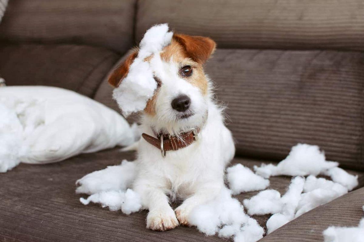 il cucciolo di cane non mi ascolta mai