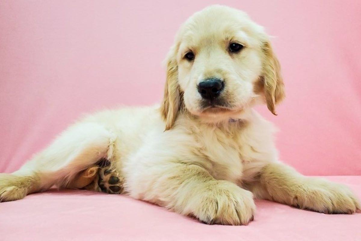 Al cucciolo di cane piacciono le coccole oppure no?