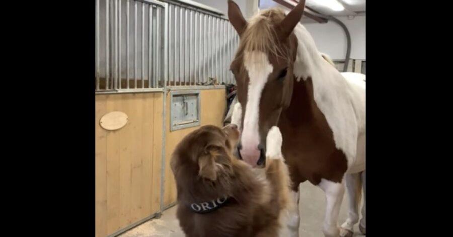 cavallo e cane si vogliono bene e si abbracciano