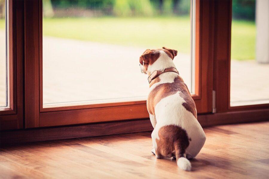 cane davanti alla finestra