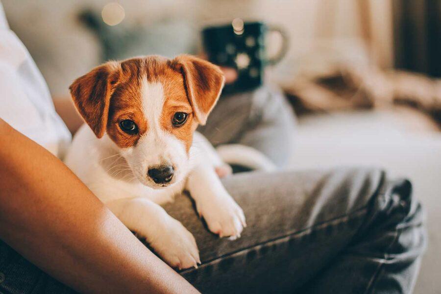cagnolino in braccio