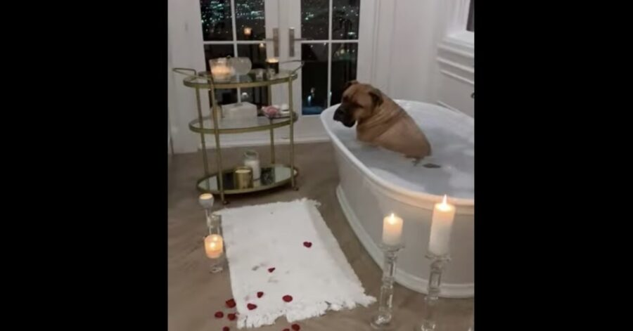 cane fa il bagno con rose e candele