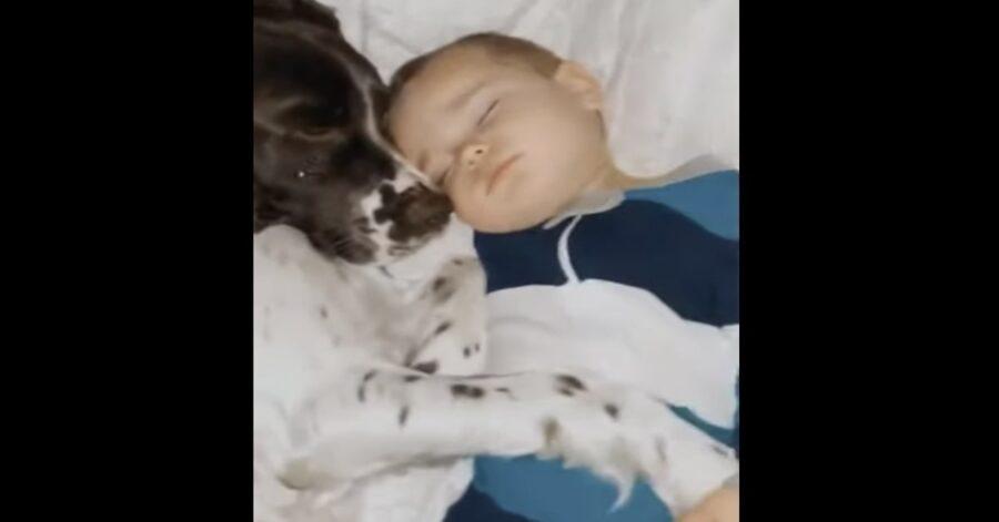 cane e bimbo addormentati