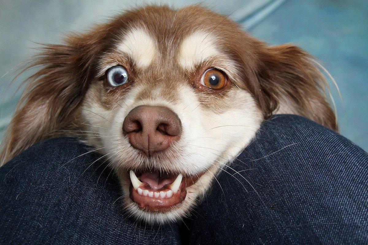 cagnolino felice