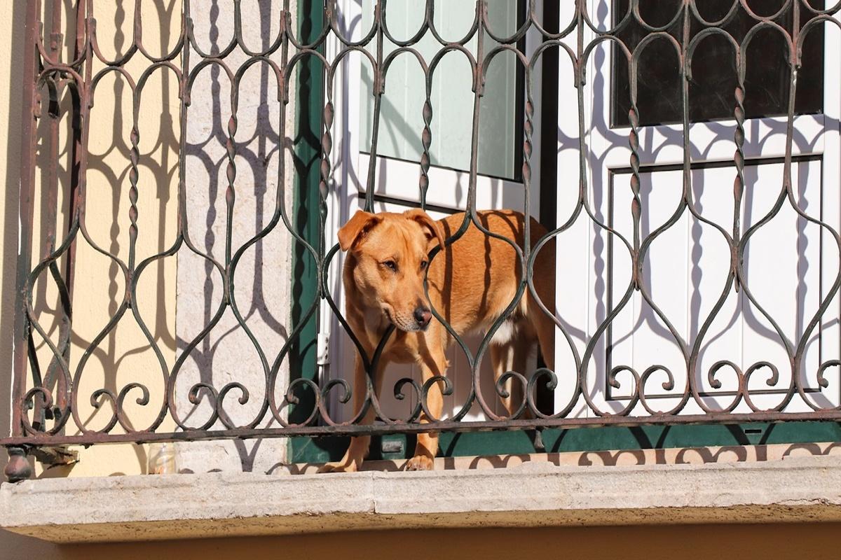 cane infila testa fra sbarre