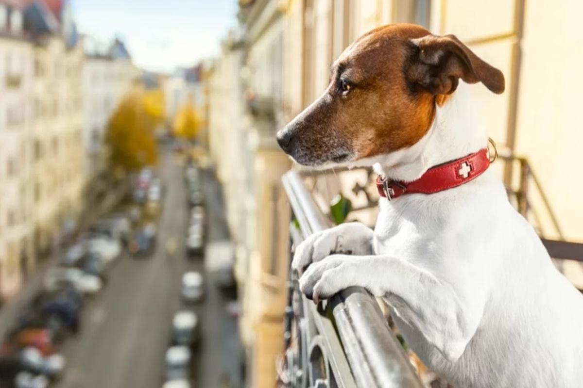 cagnolino affacciato da terrazzo