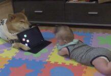 cane fa da babysitter a bimbo
