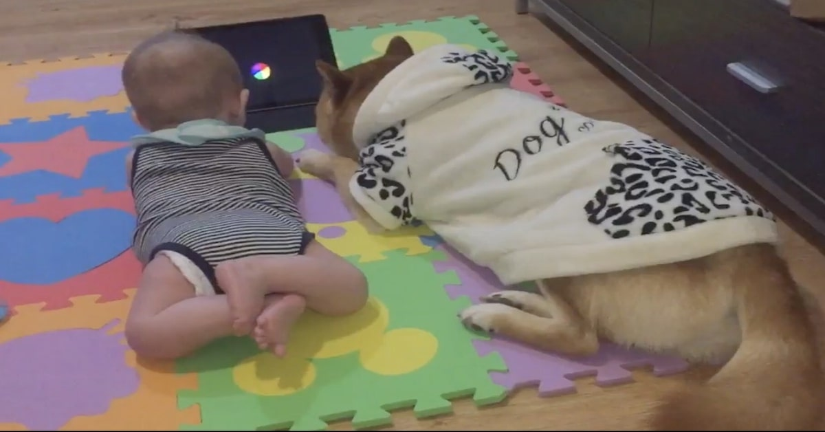 Husky e bimbo vedono video con tablet