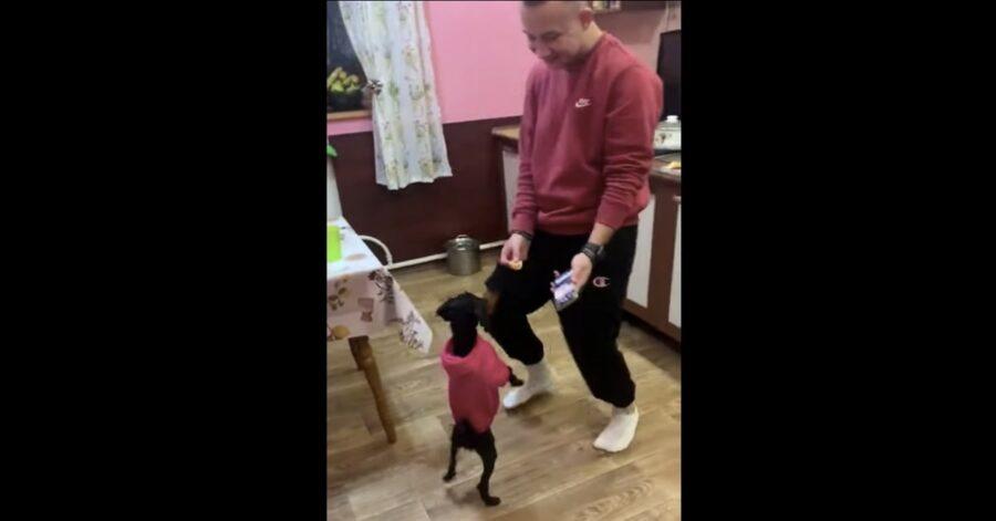 cane impovvisa ballo con padrone