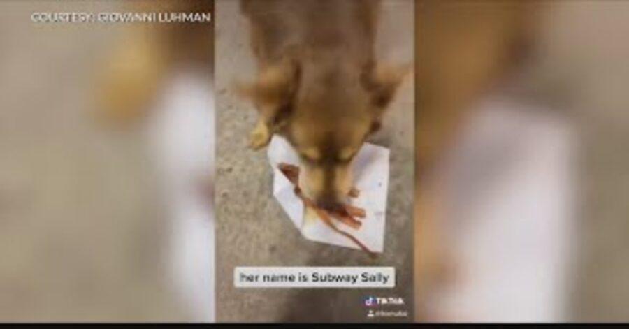 Subway Sally mangia la cena offertagli