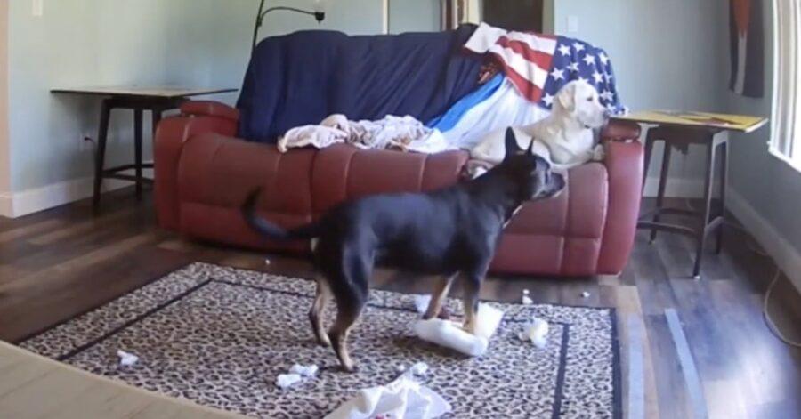 divano distrutto da un cane