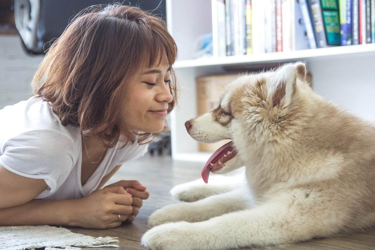 Cane e visite veterinarie: quali sono i controlli di routine per Fido?