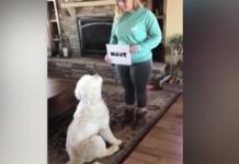 cane legge comando scritto