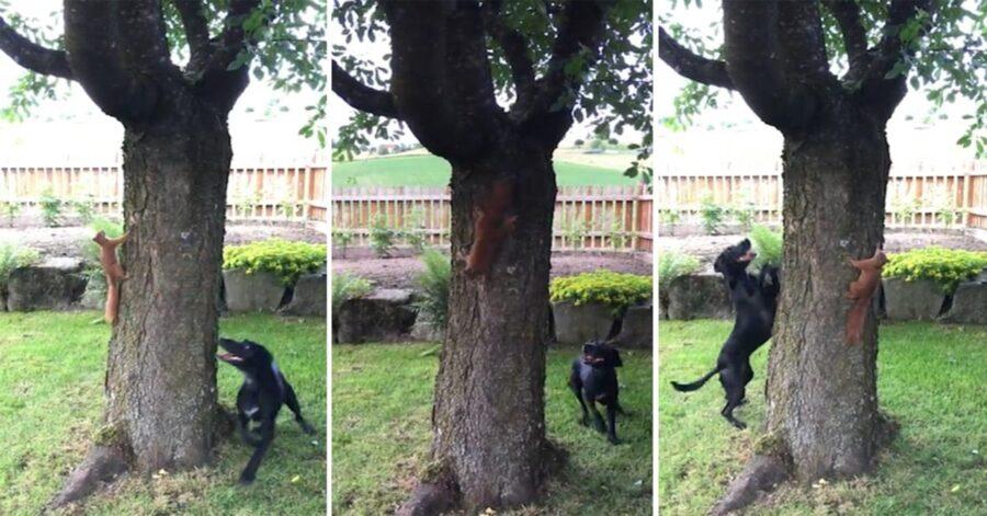 cane gioca con un roditore intorno all'albero