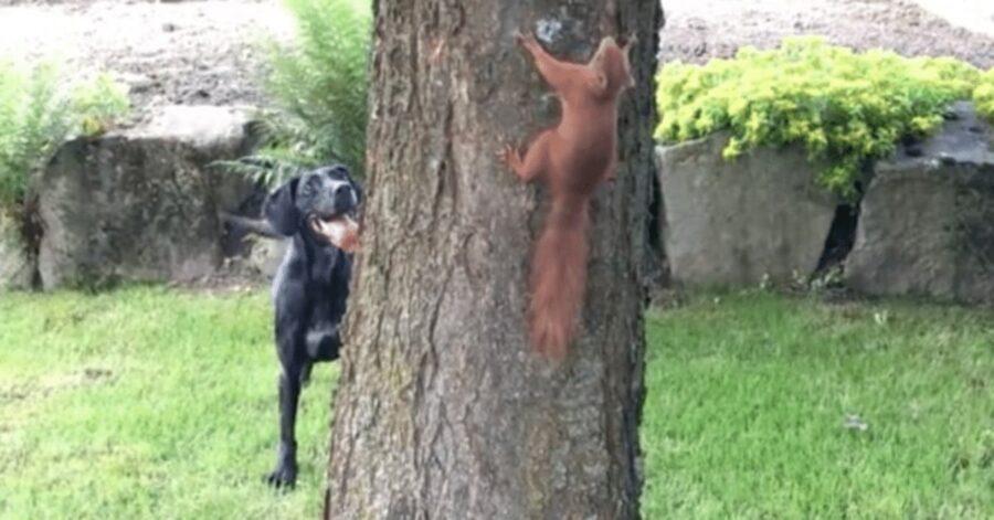 cane e scoiattolo giocano