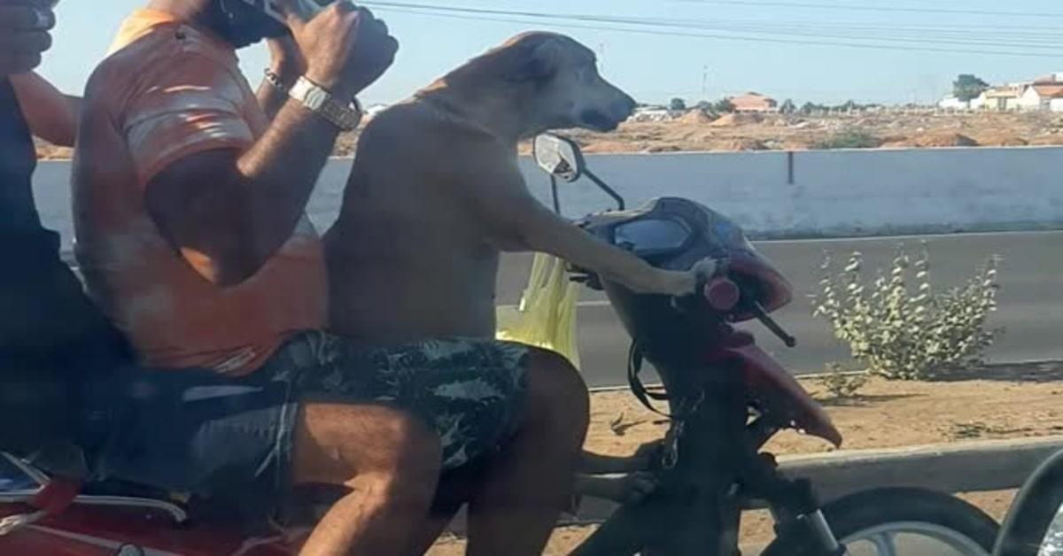 Un cucciolo di Labrador guida una motocicletta con due passeggeri a bordo (VIDEO)