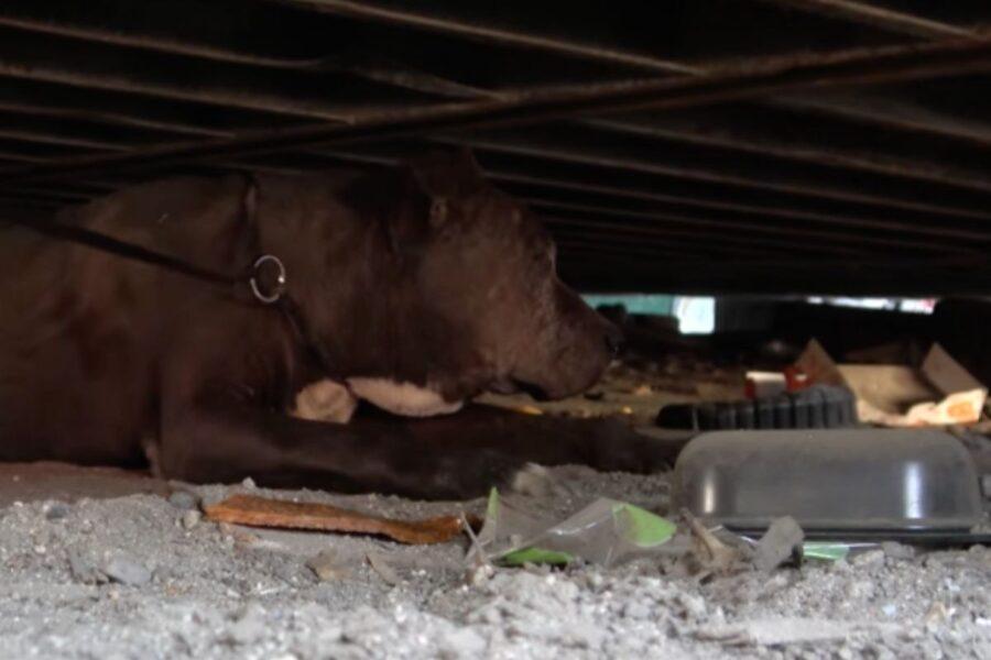 Cane anziano ha vissuto per nove anni sotto un container, ma i suoi ultimi istanti sono stati finalmente felici