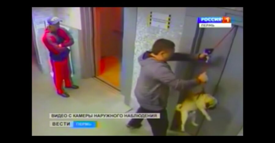 uomo salva cane rimasto incastrato nell'ascensore