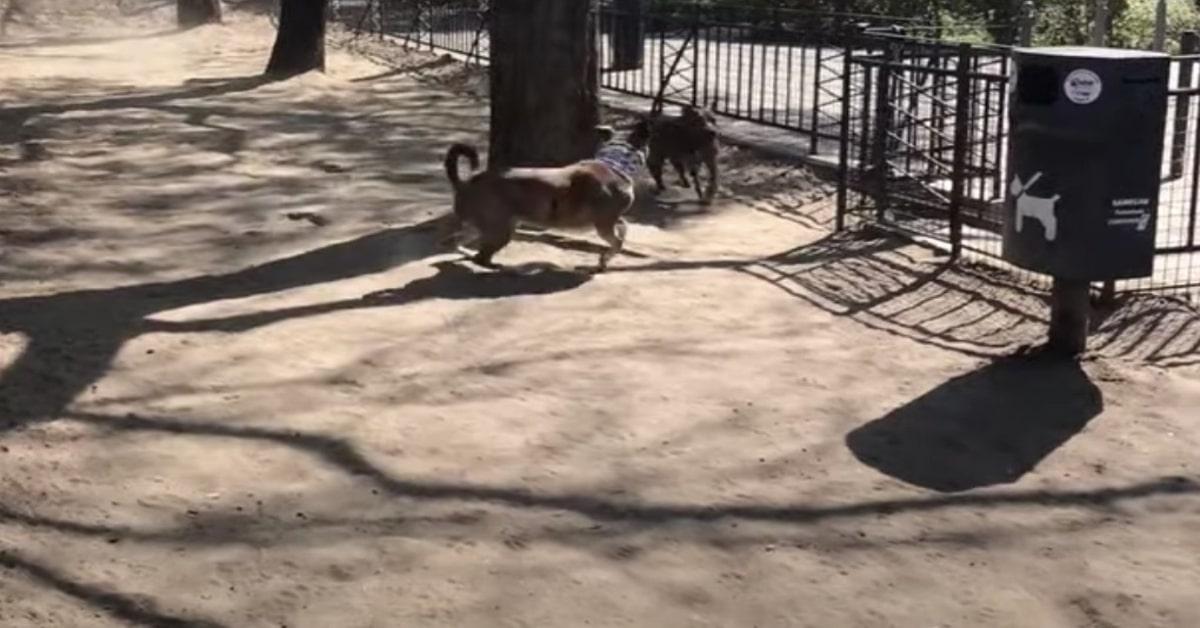 cane insegue un altro cane