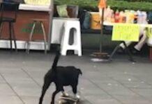 cane va in skate