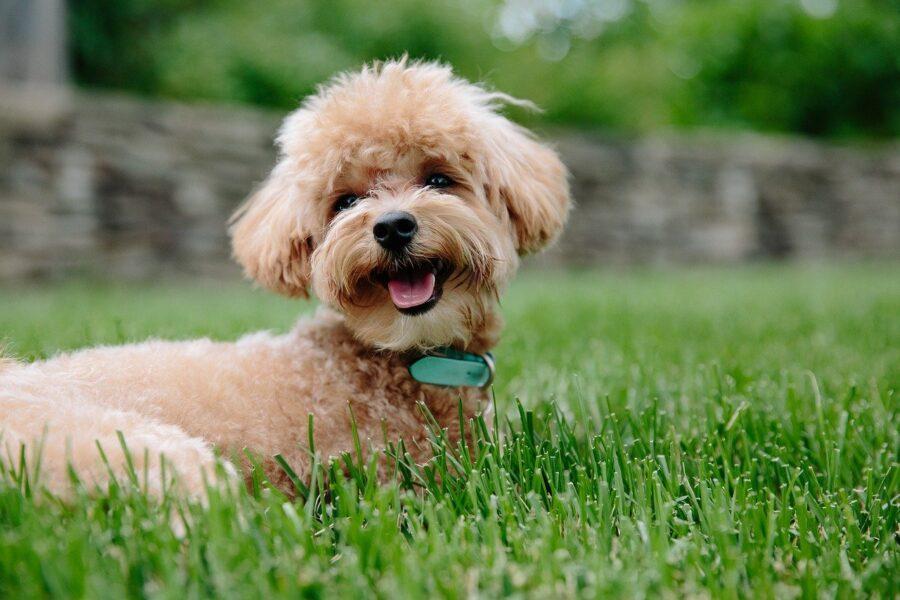 cane con sguardo felice