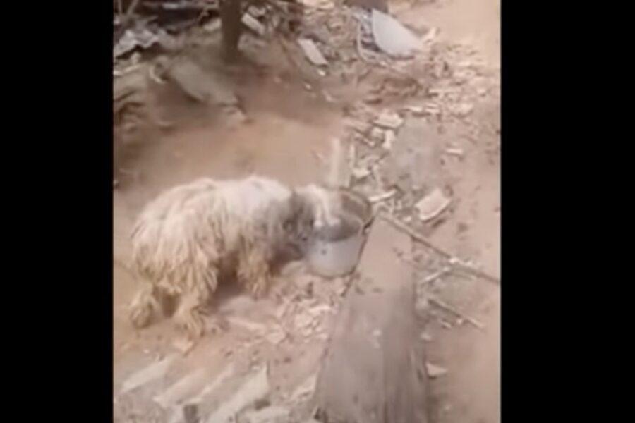 cane tenuto legato e sporco