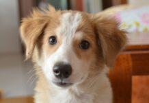 cucciolo di colore bianco e marrone