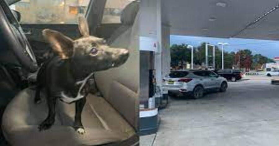 due foto  cane nero mette in moto retromarcia e benzinaio