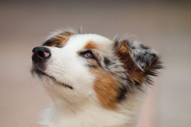 cane con testa verso l'alto