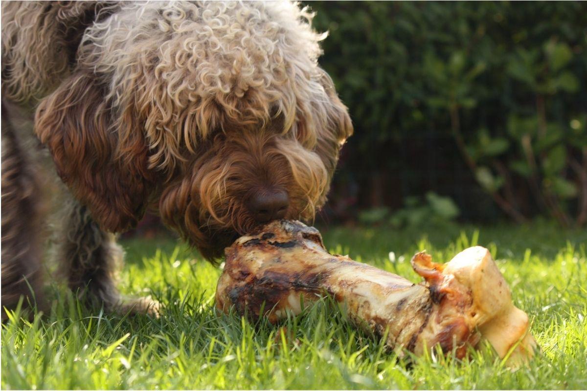 Cane morde un osso