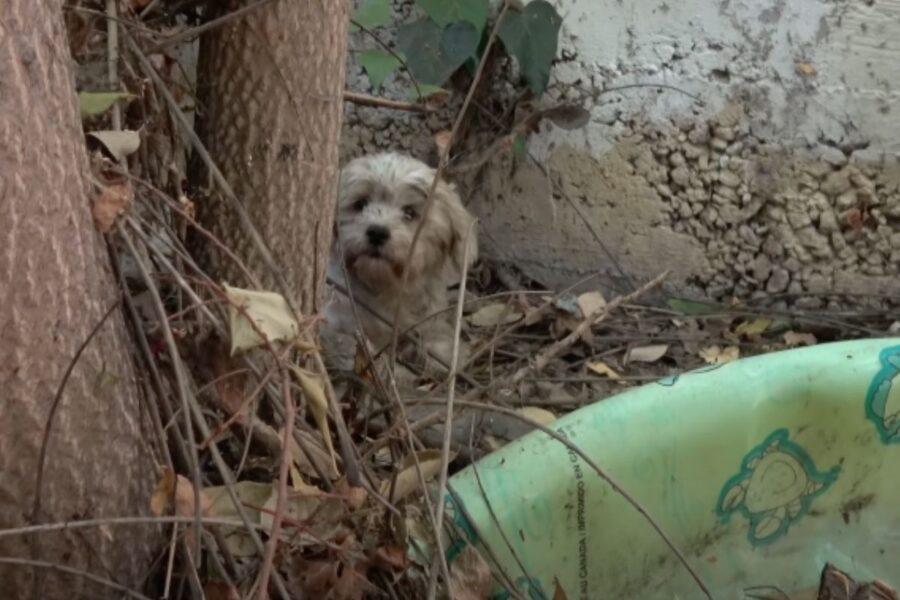 cane indifeso e sporco