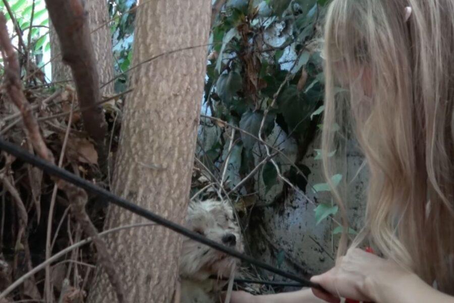 cane abbandonato che viene salvato