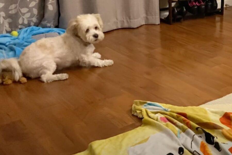 cane abbandonato che ha trovato casa