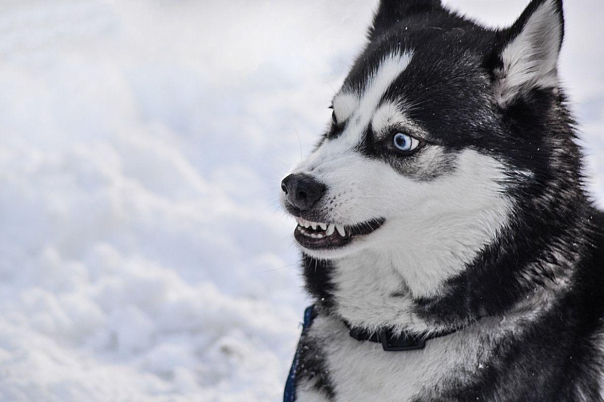 Perché il cane ringhia da solo?