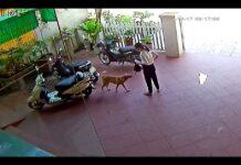 cane riporta il portafoglio a una donna