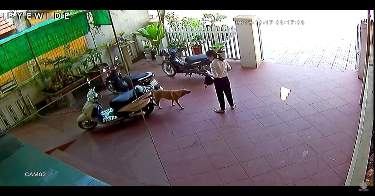 Un cucciolo di cane riporta il portafoglio a una donna che lo aveva perduto (VIDEO)