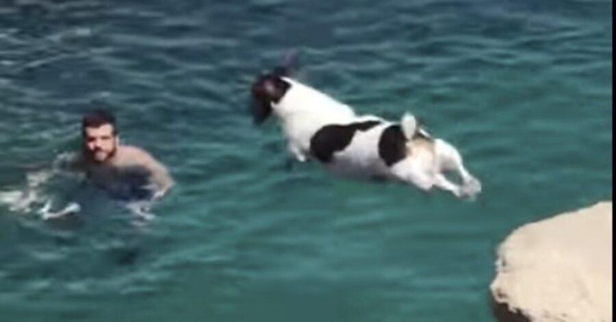 Malta: un cucciolo di cane fa un bellissimo tuffo per raggiungere il suo proprietario in acqua (VIDEO)