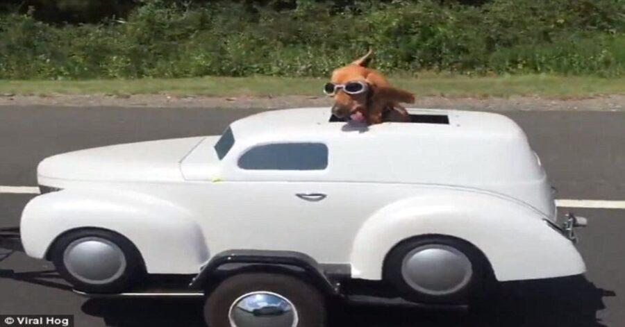 cane su sidecar a forma di automobilina bianca