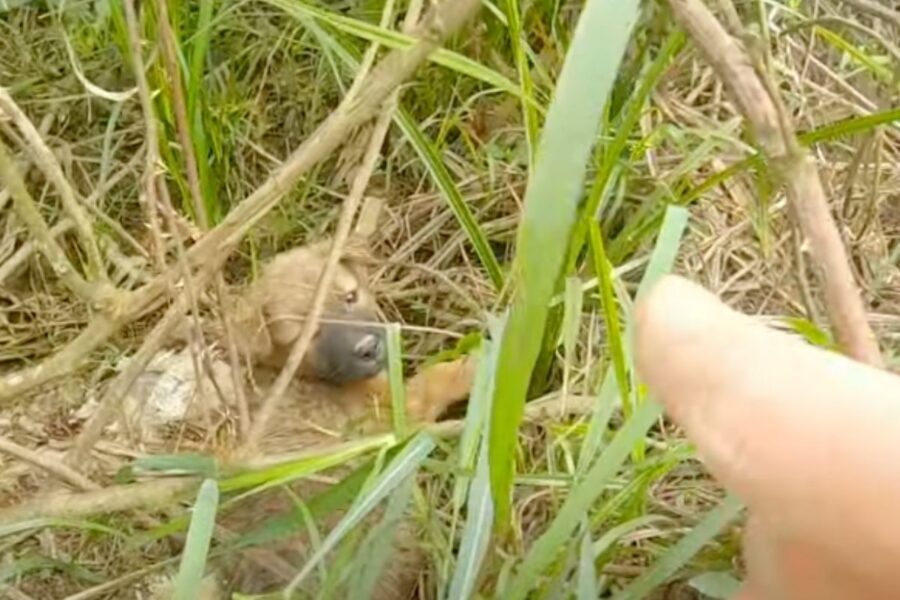 cane trovato nell'erba