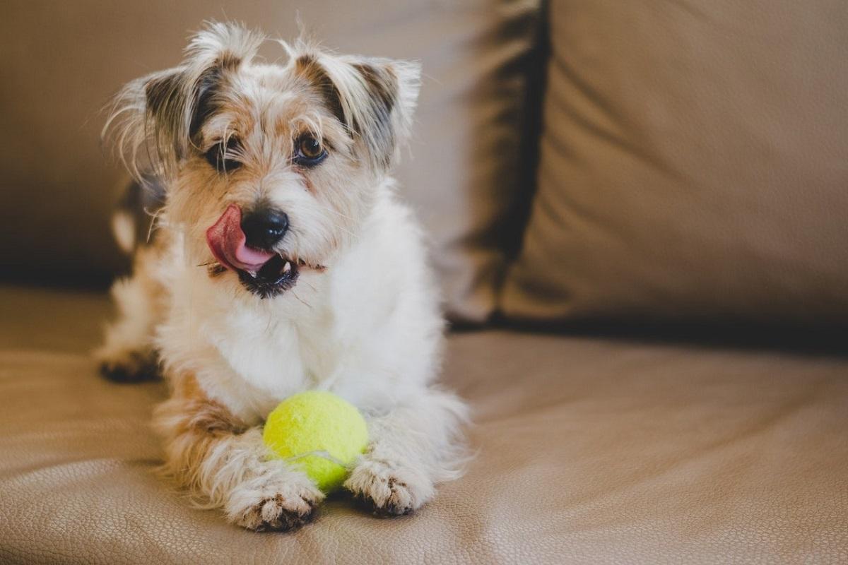 cane e pallina da tennis