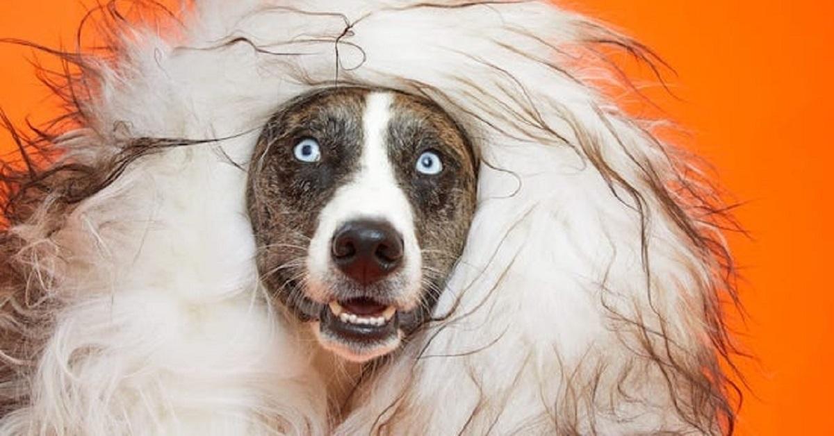 cani dal veterinario-parrucca