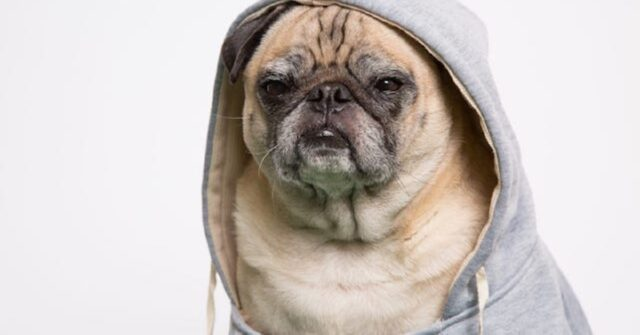 cani dal veterinario-rapper