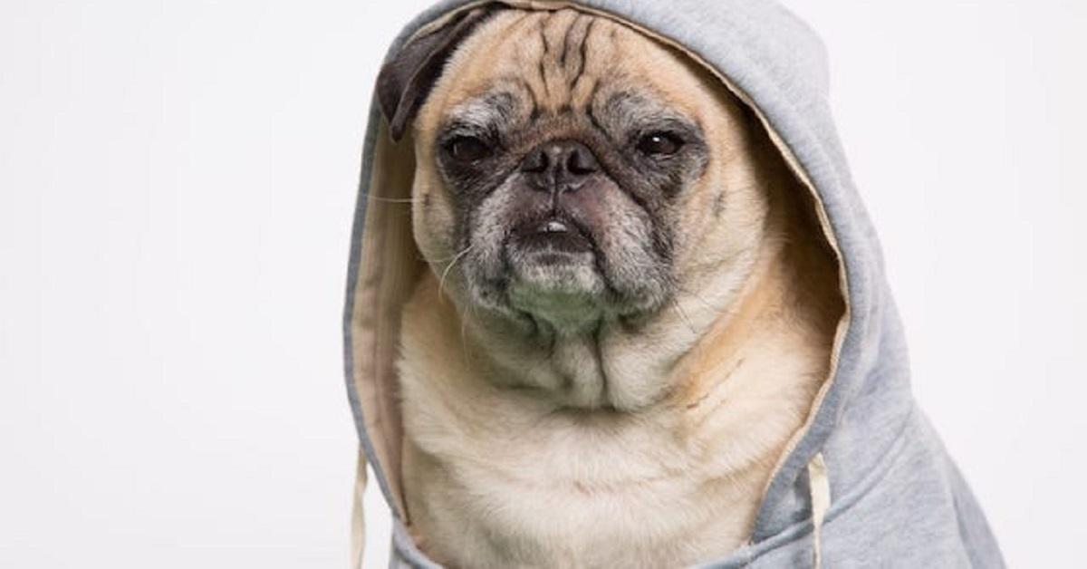 cani dal veterinario-rapper