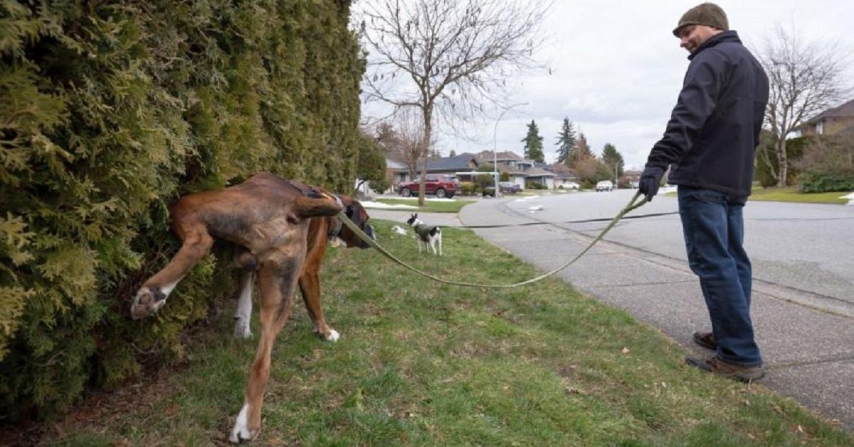 Il cane dei vicini fa i bisogni nel vostro giardino? 10 modi per evitarlo