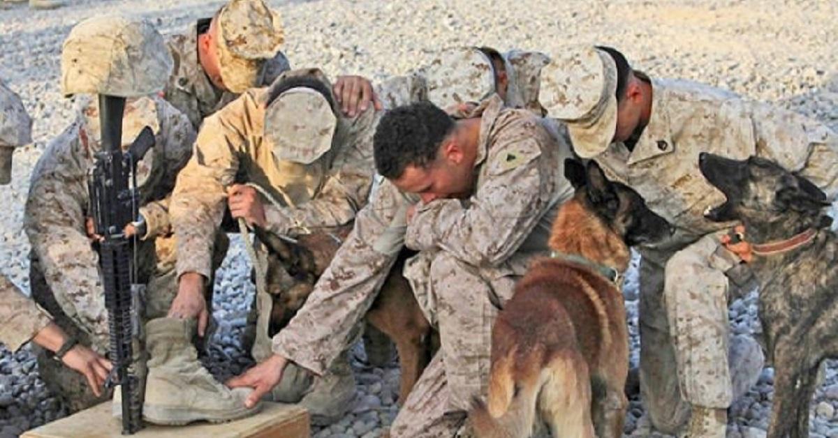 cani militari-soldato caduto