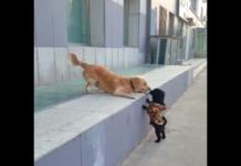 cani si baciano