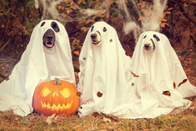 cani ad halloween